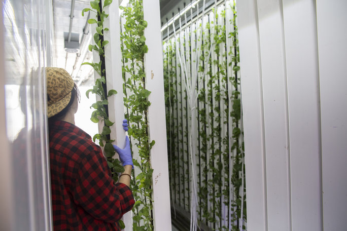 Ernte Vertical Farming