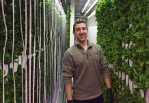 Mann in Vertical Farming Umgebung